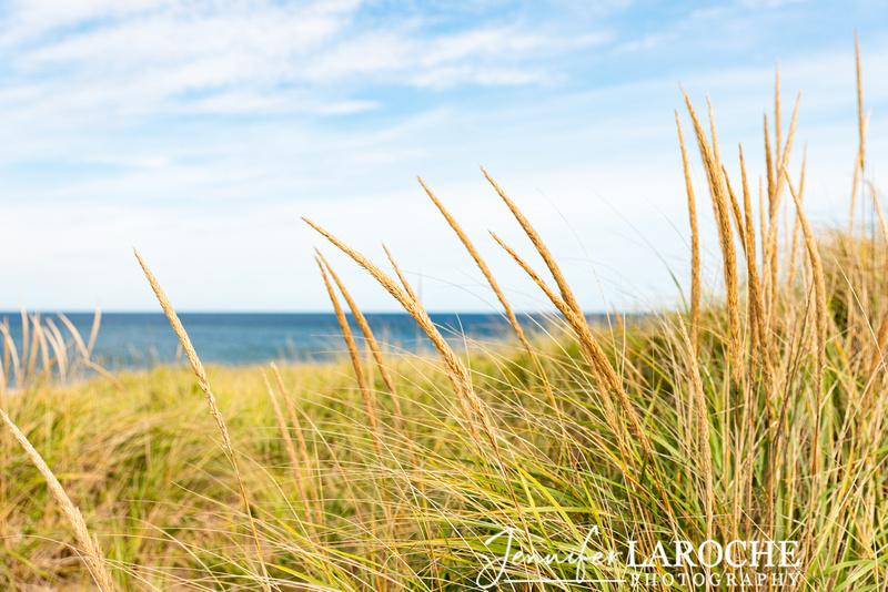 close up beach grass image overlooking race point beach