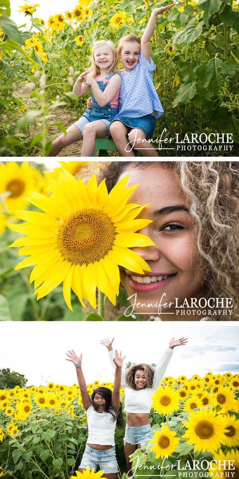 people in Colby Farm sunflower field