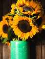 Fall Sunflowers in Tin
