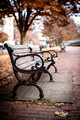Commonwealth Avenue Mall Park Bench